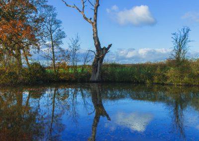 TREE-POND-WIDE